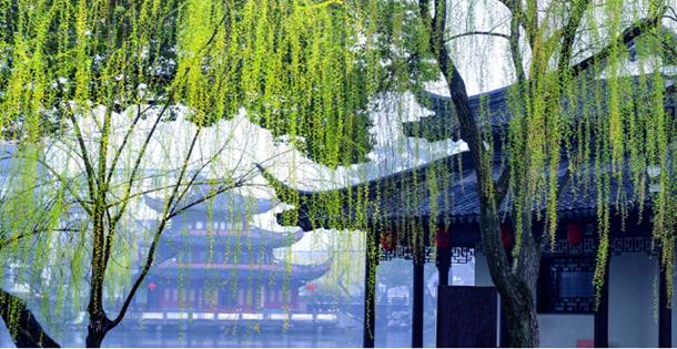 天一阁 · 月湖景区 新柳萌发美如画