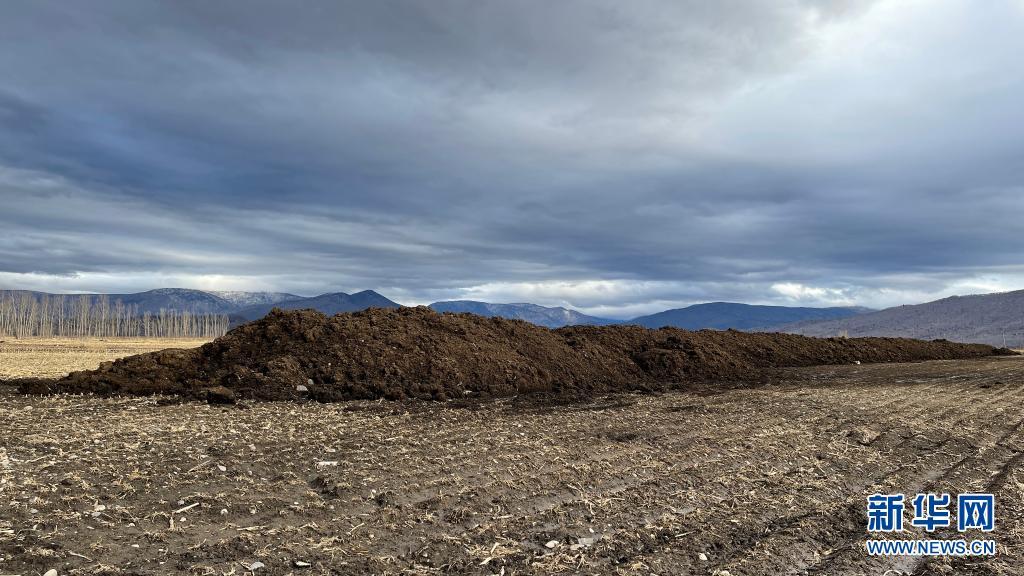 3月28日,黑龙江省五常市沙河子镇福太村被盗挖的黑土在田间堆积。新华社记者 杨思琪 摄