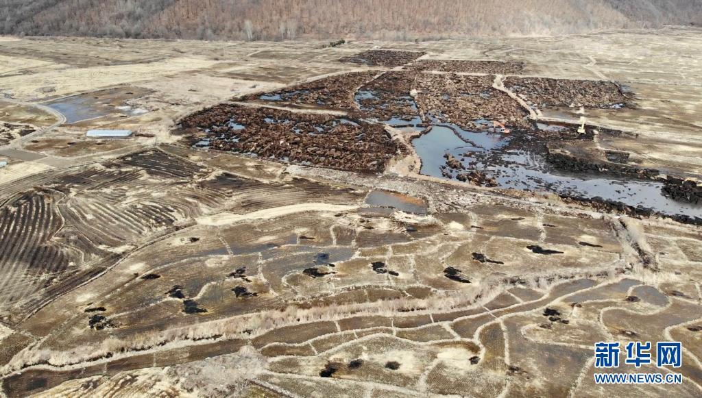 """3月30日,在黑龙江省五常市沙河子镇福太村,采挖现场暴露着深度为半米至1米不等的多个大坑,如同大地的""""疮疤""""(无人机照片)。新华社记者 马知遥 摄"""