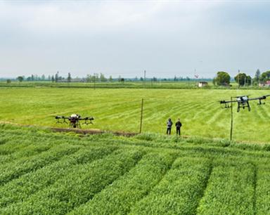安徽銅陵:風吹麥浪孕穗期 抓好田管保豐收