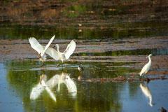 都昌:鄱阳湖畔白鹭洲