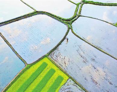 会昌县:春耕春种 田园如镜