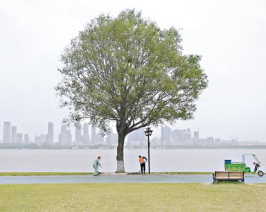 """超5000名游客慕名打卡 武汉江滩""""孤独的树""""不孤独"""