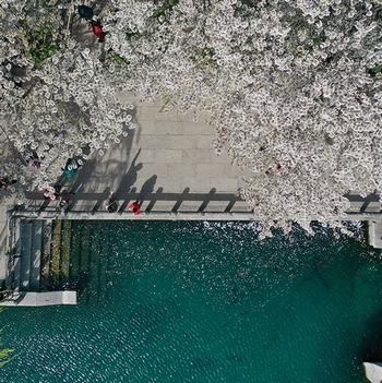 这就是山东·凤瞰齐鲁丨春日好时光!航拍济南五龙潭公园樱花盛开