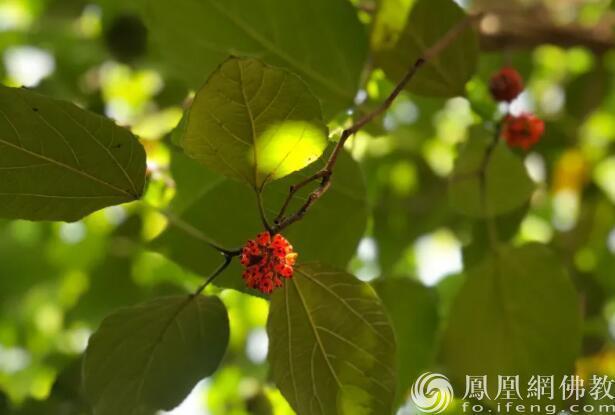 图片来源:凤凰网佛教 摄影:阿什离