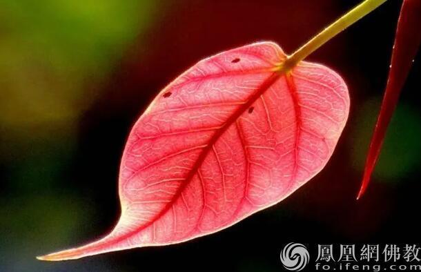 图片来源:凤凰网佛教 摄影:慧海