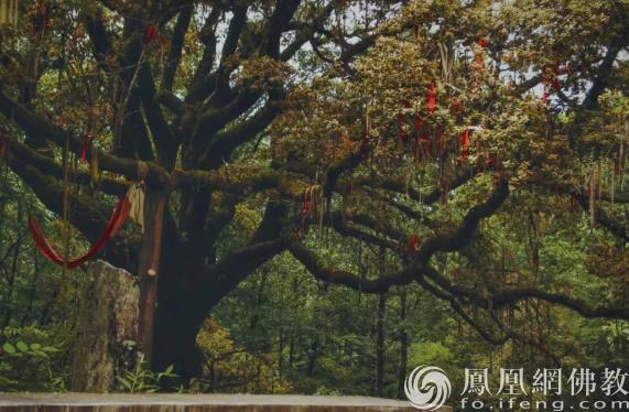 图片来源:凤凰网佛教 摄影:续果