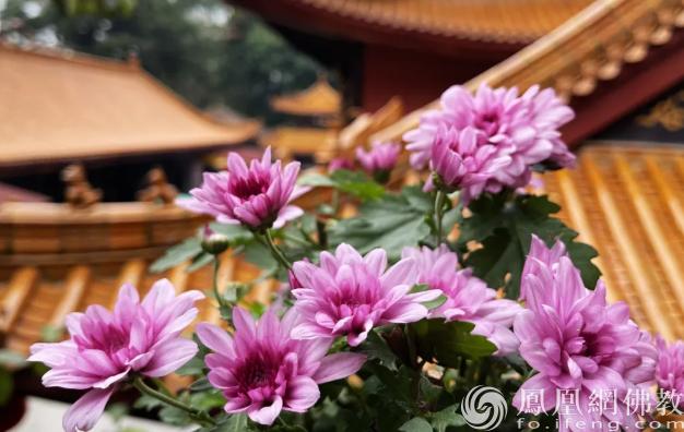 图片来源:凤凰网佛教 摄影:张满常