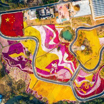 蚌埠:菊花成画 秋日里的一抹靓丽风景