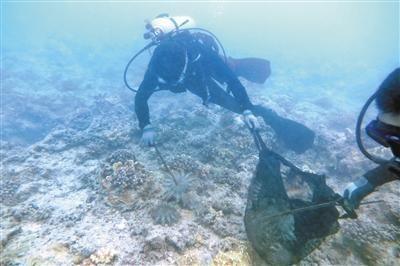 清理人员在海底用夹子和网兜捕捞长棘海星。