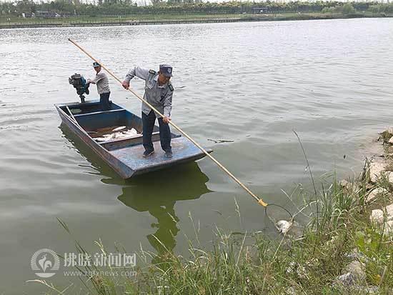 持续高温、水质下降 宿州新汴河鱼类出现死亡