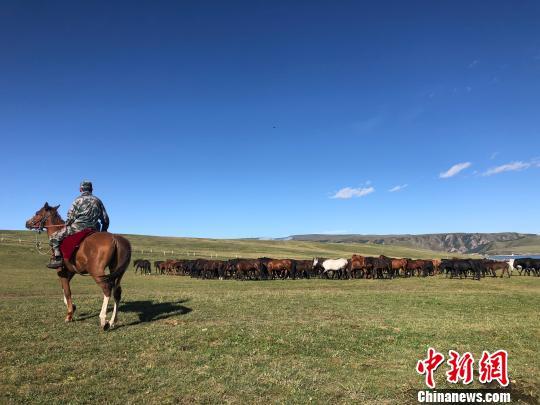 图为山丹马场的秋日牧马景致。 徐雪摄