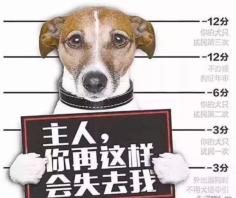 犬只扰民、遛犬不拴绳 马鞍山421名犬主被处罚!