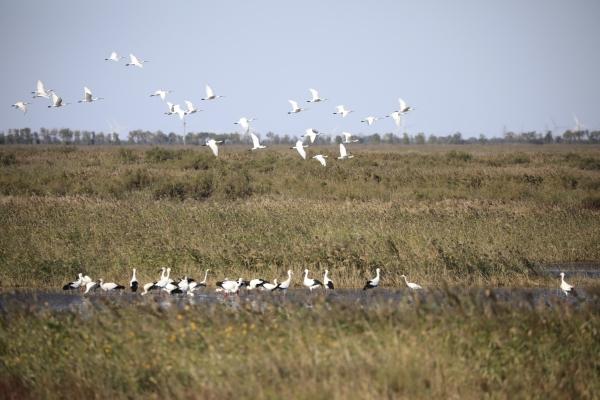 东营:黄河三角洲迎来首批迁徙候鸟
