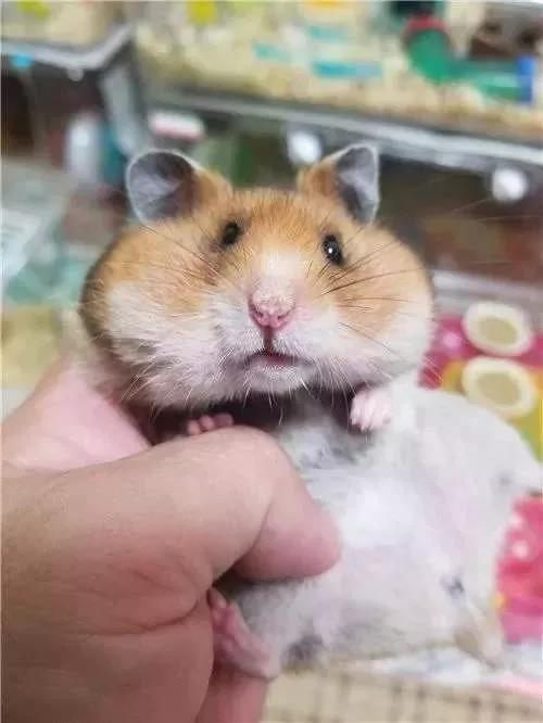 """鼠年""""鼠""""最俏 宣城街头""""鼠小弟""""成新宠"""