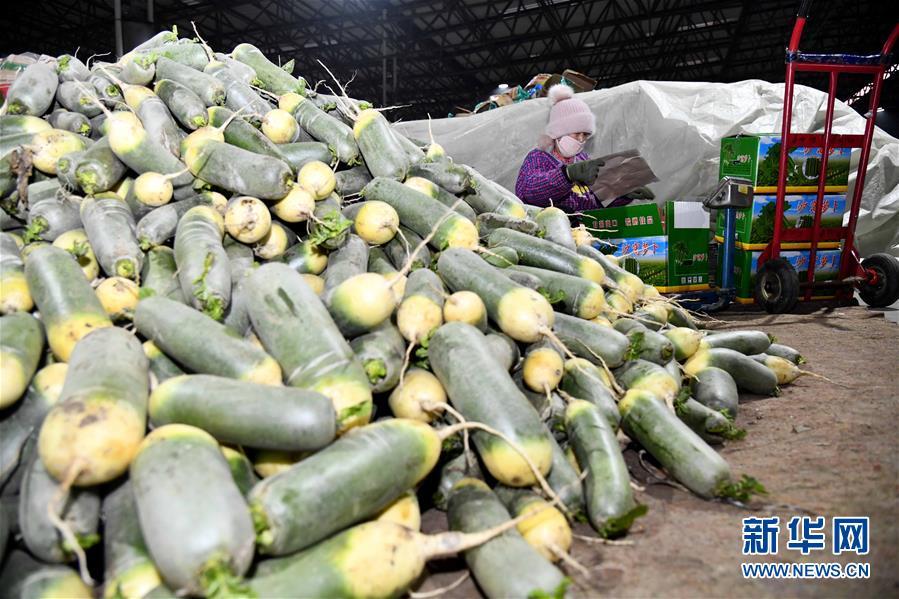 (聚焦疫情防控·新华视界)(4)山东寿光:积极保障蔬菜供应