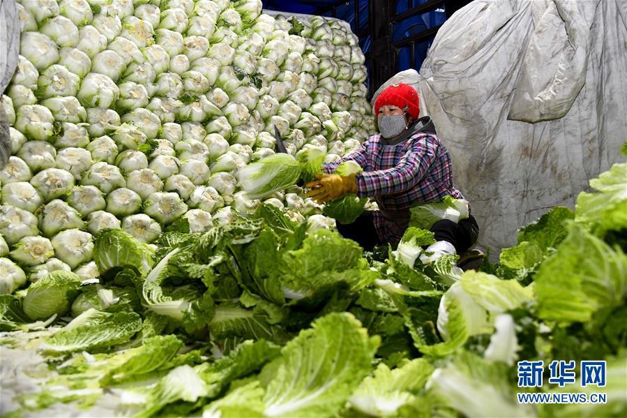 (聚焦疫情防控·新华视界)(1)山东寿光:积极保障蔬菜供应