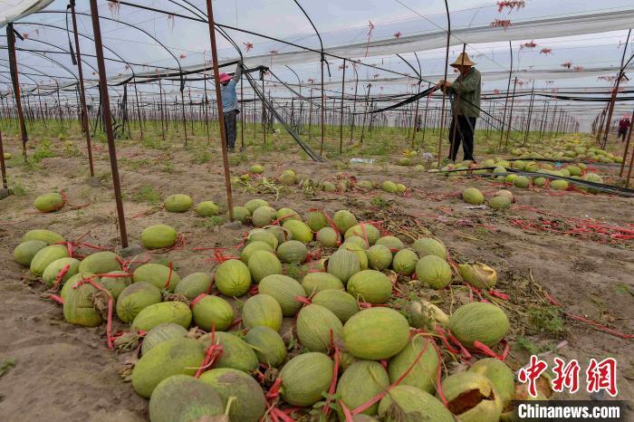"""中国冬季""""菜园子""""海南蔬果滞销线上开辟新销路"""
