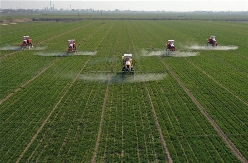 河北搶抓農時 加強冬小麥春季管理