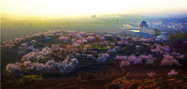 春日游来锦州:在花海中踏青登山