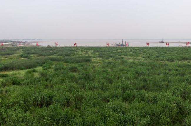 安乡县安丰乡珊珀湖湿地。新华社记者陈思汗摄