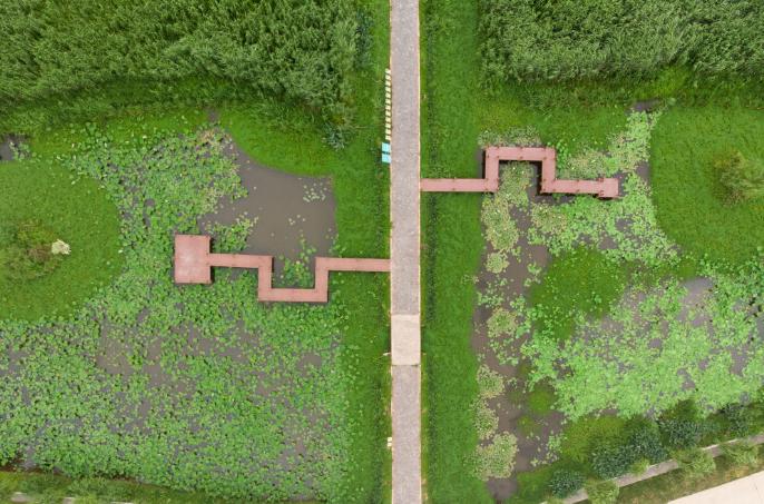 安乡县安丰乡的珊珀湖湿地亲水平台。新华社记者陈思汗摄
