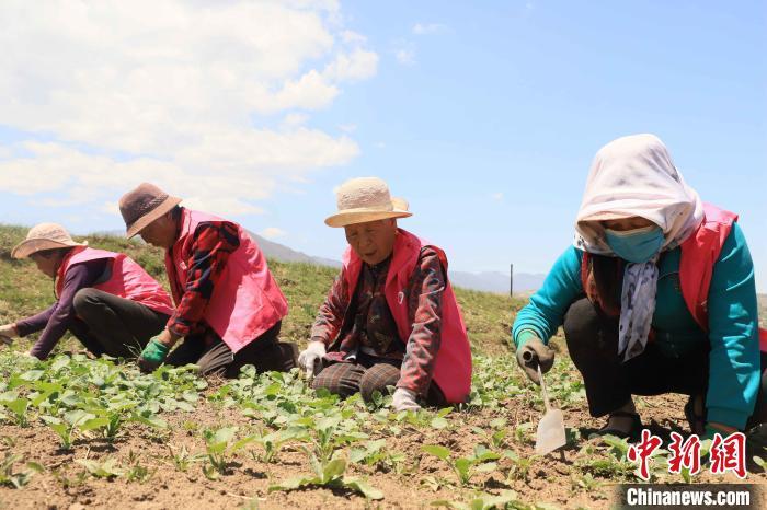 """图为""""爱心农场""""内劳动的志愿者。 石延寿摄"""