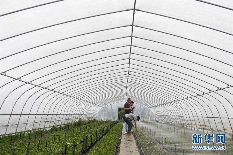 (图片故事)(14)新疆夫妇在江苏学种月季谋致富