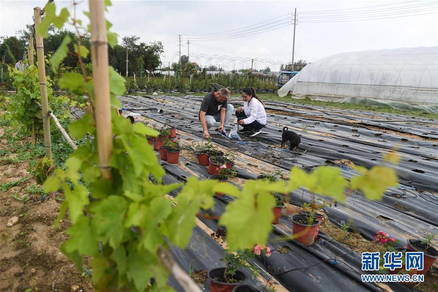 (图片故事)(13)新疆夫妇在江苏学种月季谋致富
