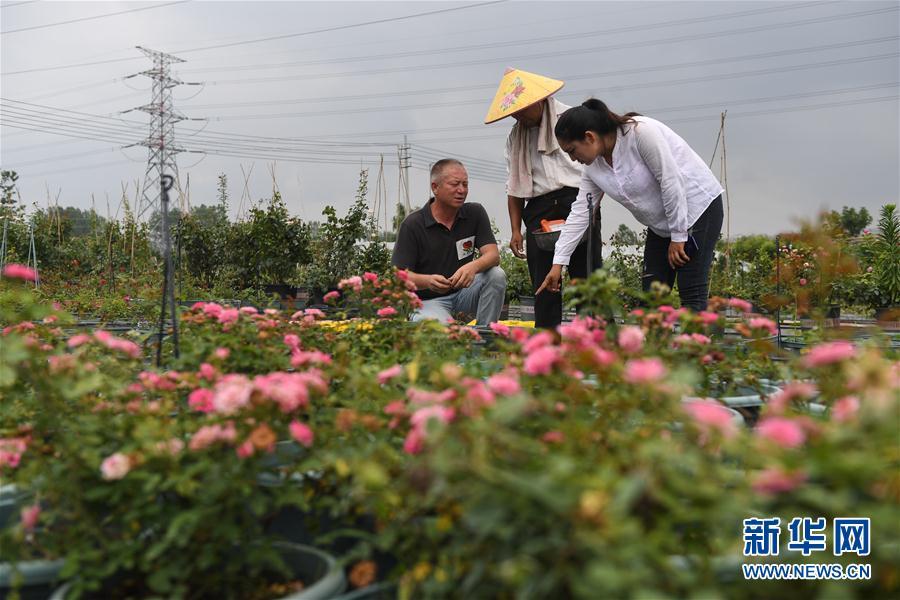 (图片故事)(6)新疆夫妇在江苏学种月季谋致富