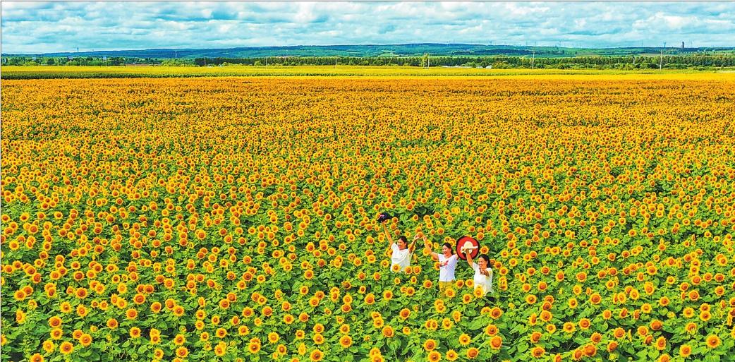 万亩向日葵喜迎旅发大会
