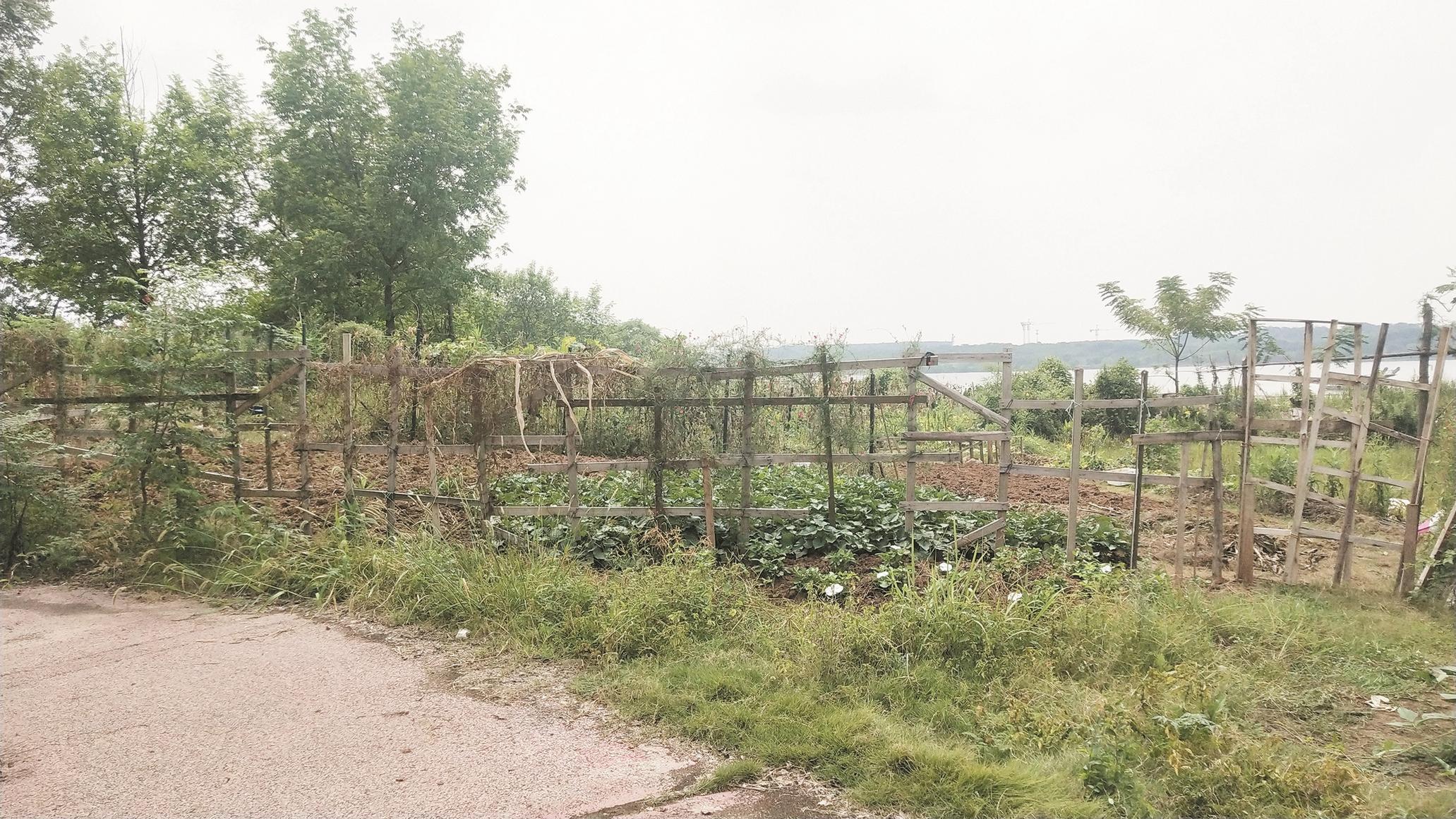 """小区旁边的""""公园""""变成了菜地,规划部门表示允许创业。 成园小区地"""