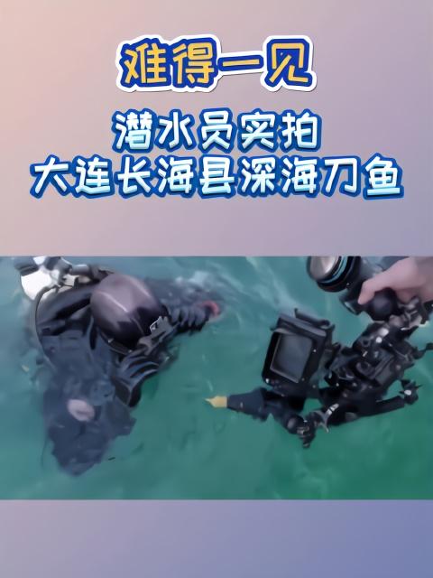 难得一见!潜水员实拍大连长海县深海刀鱼