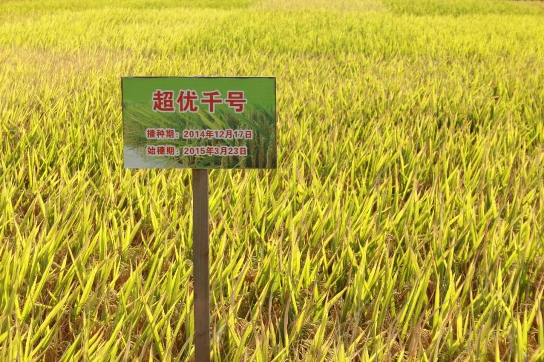 袁隆平谈粮食安全:要搞既高产又优质 我们做得到!