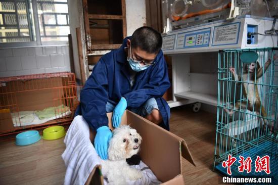 【seo培训课程】_比熊犬给昆明动物园黑豹幼崽当奶妈