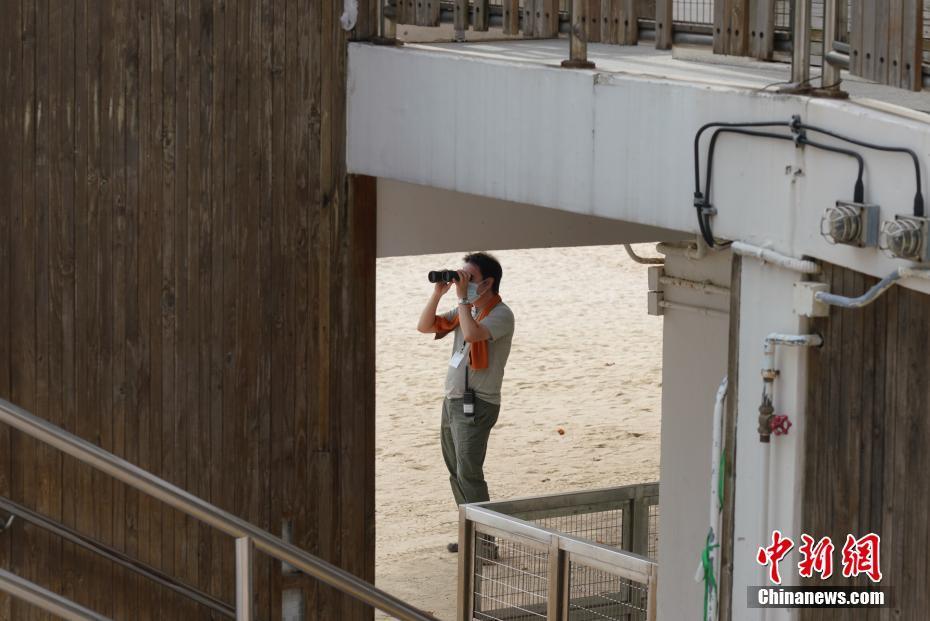 7月25日,香港深水湾泳滩已经封闭,工作人员用望远镜观察泳滩情况。香港康乐及文化事务署当天宣布,因应新冠肺炎最新情况,康文署辖下所有泳滩已经关闭,泳滩的设施暂停开放,进入已封闭的沙滩属违法行为,一经定罪可被罚款2000港元及监禁14天。康文署呼吁市民尽量留在家中,不要前往沙滩游泳或日光浴,减低病毒在社区传播的风险。中新社记者 张炜 摄