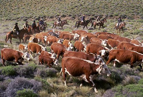 美国和阿根廷的农牧业产品结构相似,在国际市场上相互竞争。