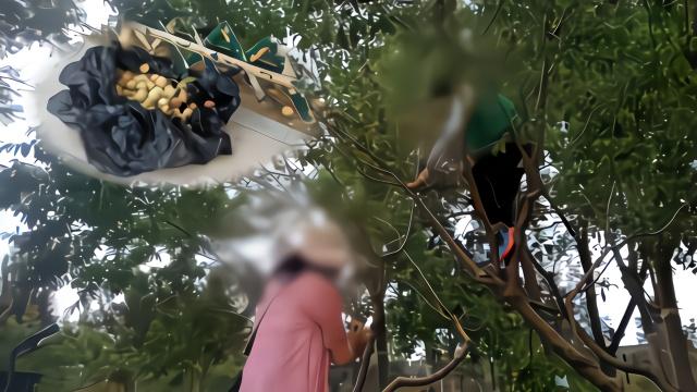 大妈公园爬树疯狂摘桃 竟称:六一找找儿时的感觉