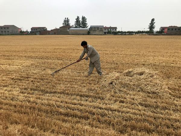 一位村民在地里用铁耙处理秸秆。