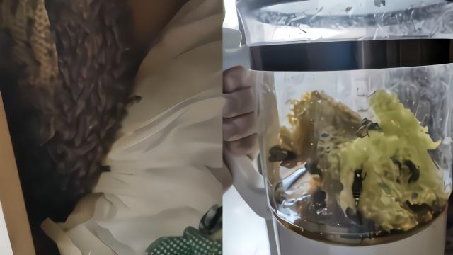 大学生返校发现衣柜藏蜂窝 赶走蜜蜂自己吃蜂蜜:真甜
