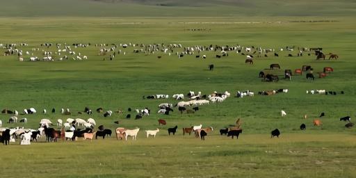 """【久久热在线推广软件】_""""蒙古国向中国捐赠3万只羊""""故事将拍成纪录片"""