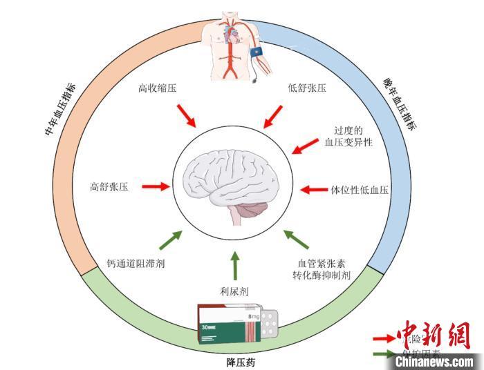 中国学者最新研究:高血压会加速痴呆