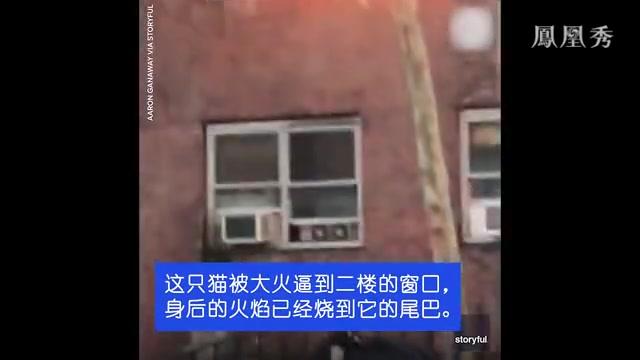 小猫被困着火的公寓,被逼从二楼跳下