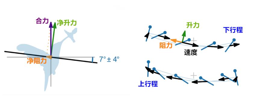 分析蜂鸟振翅时所产生的力   参考文献[1]