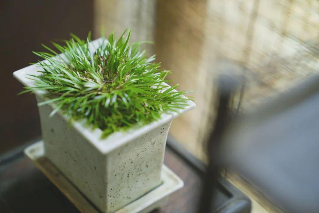 大学教授为一株草建了一座院子,成江南草圣
