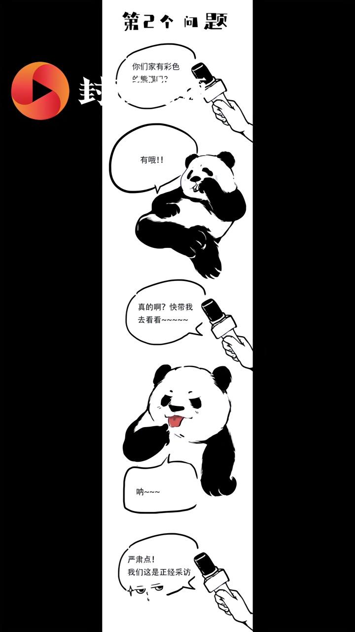 """四川人骑熊猫上学吗?小朋友的问题熊猫今天统一""""接受采访""""回复一下"""