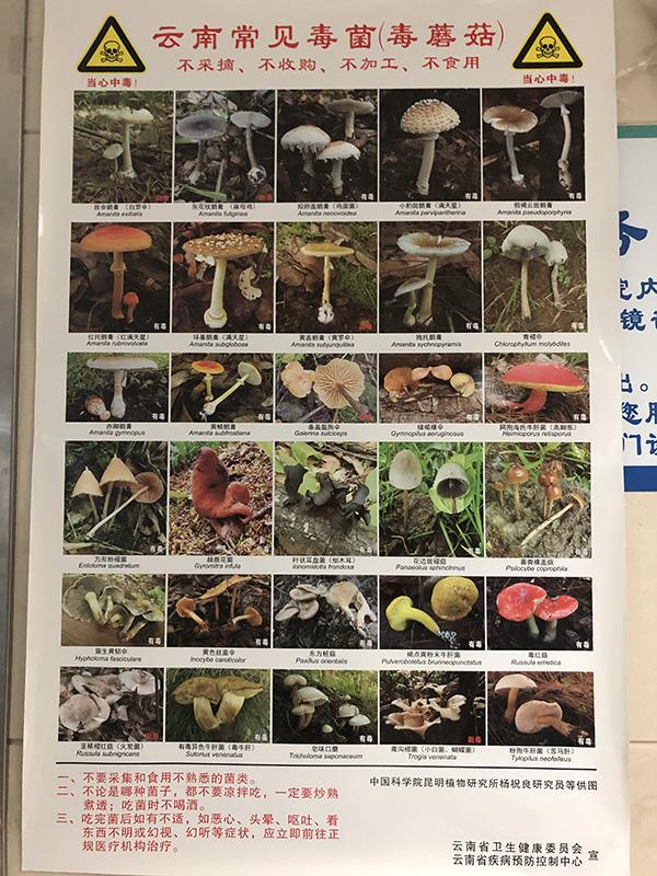 张贴在医院的云南常见有毒野生菌图片  本文图均为 澎湃新闻记者 王万春 图(除署名外)