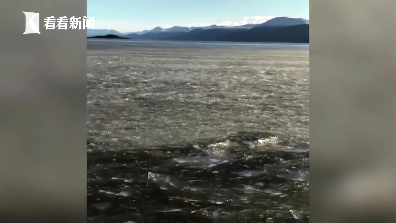 地球最南端城市迎来冷空气 整片海岸被冰冻