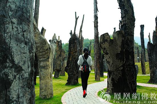 图片来源:凤凰网佛教 桐柏山乌木博物馆提供
