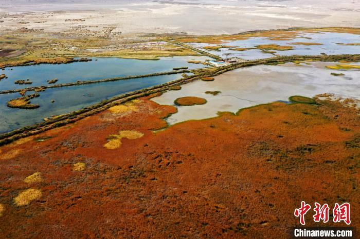 张掖黑河湿地国家级自然保护区高台段湿地一角。 郑耀德 摄